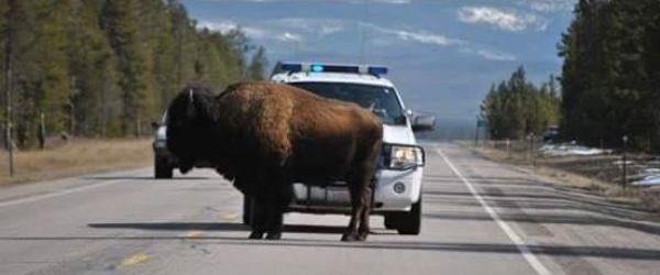 Hells Bells este o piesa importanta pentru politia din Montana